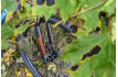 SUPERIOR XP 909 MATTE PETROL BLUE/SILVER/RED 2020 + PŘEKVAPENÍ